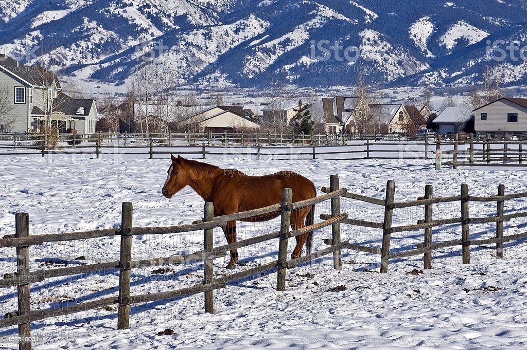 Montana Winter stock photo