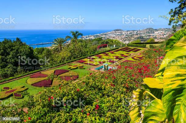 Monte tropical gardens in funchal town madeira island portugal picture id905425852?b=1&k=6&m=905425852&s=612x612&h=2hjild6edmqnakdckzw r2ktgjubksfxkdrnyytixfq=