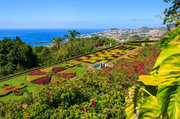 monte tropical gardens in funchal town, madeira island, portugal - funchal madeira imagens e fotografias de stock