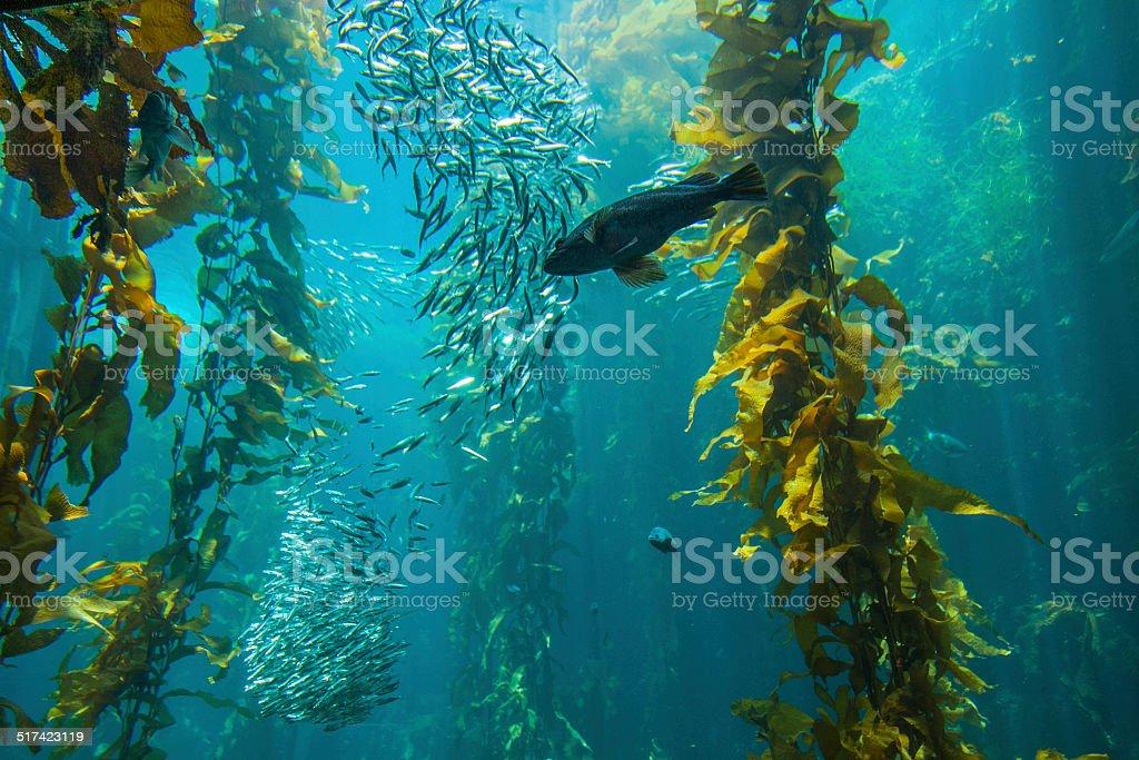 Monterey, CA - Monterey Bay stock photo