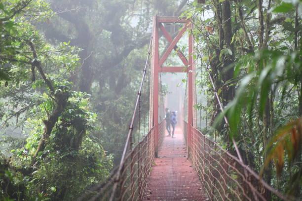 Monteverde Cloud Forest stock photo