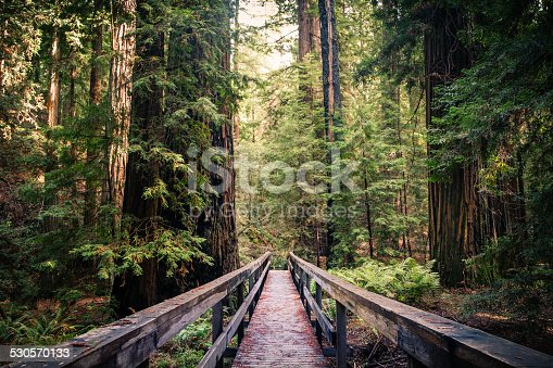 A trail bridge atop a fallen tree, among the redwood giants in the Montgomery Woods State Natural Reserve.