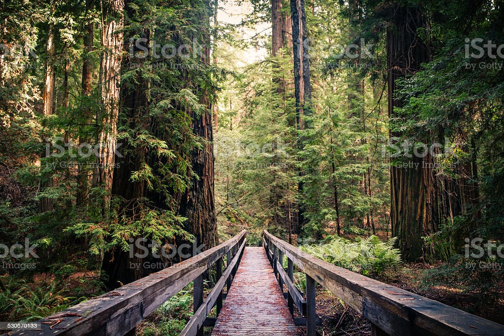 Montgomery Woods State Natural Reserve stock photo