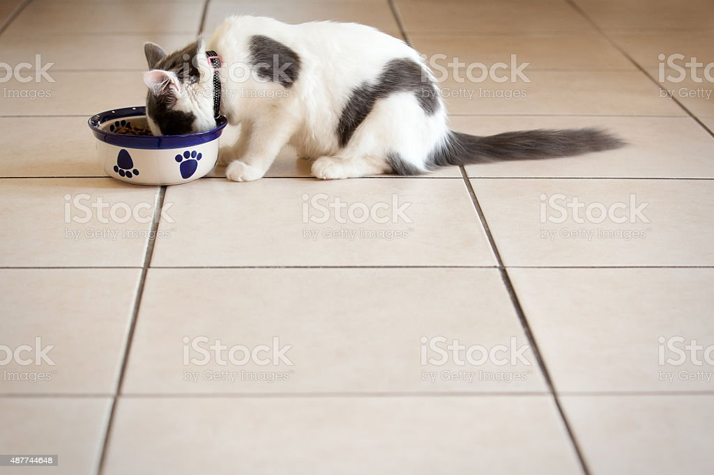 5 Month Old Kitten Eating From Food Dish stock photo