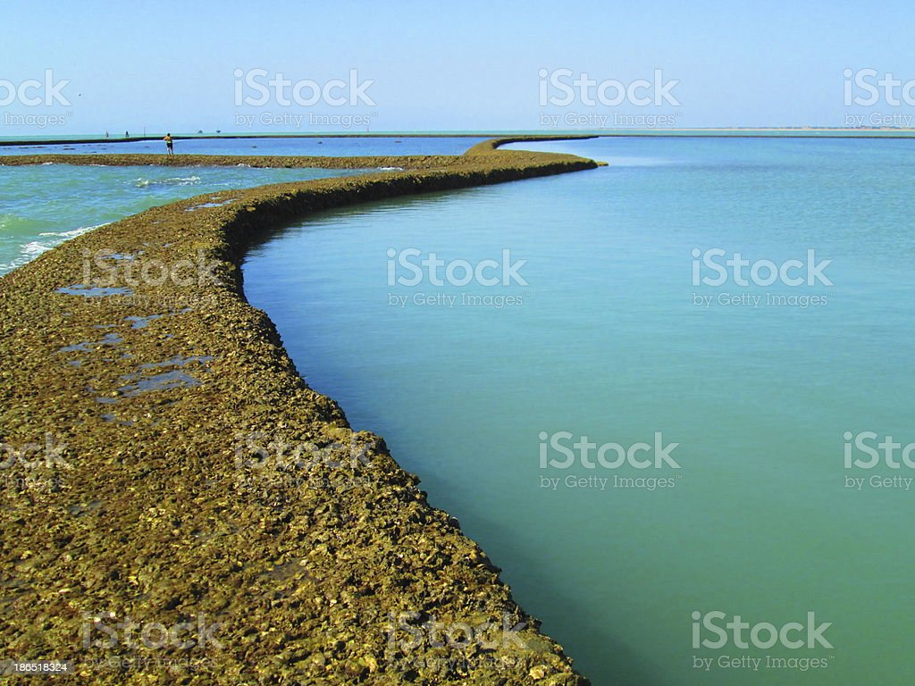 Montijo beach coral shellfish trap royalty-free stock photo