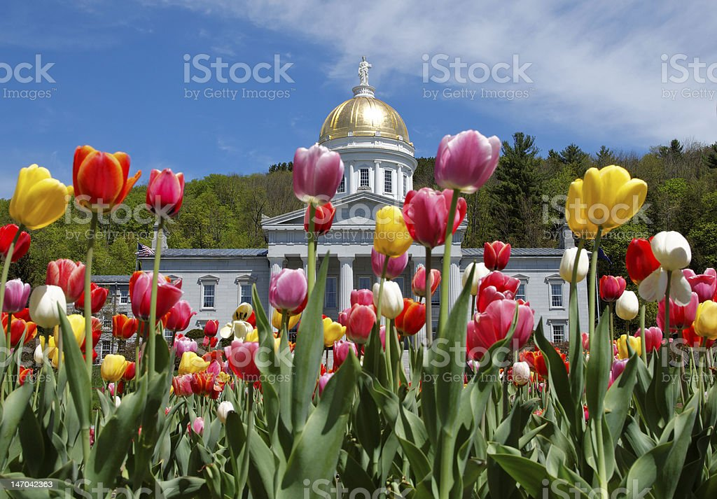 Montpelier Capital building with Tulips stock photo
