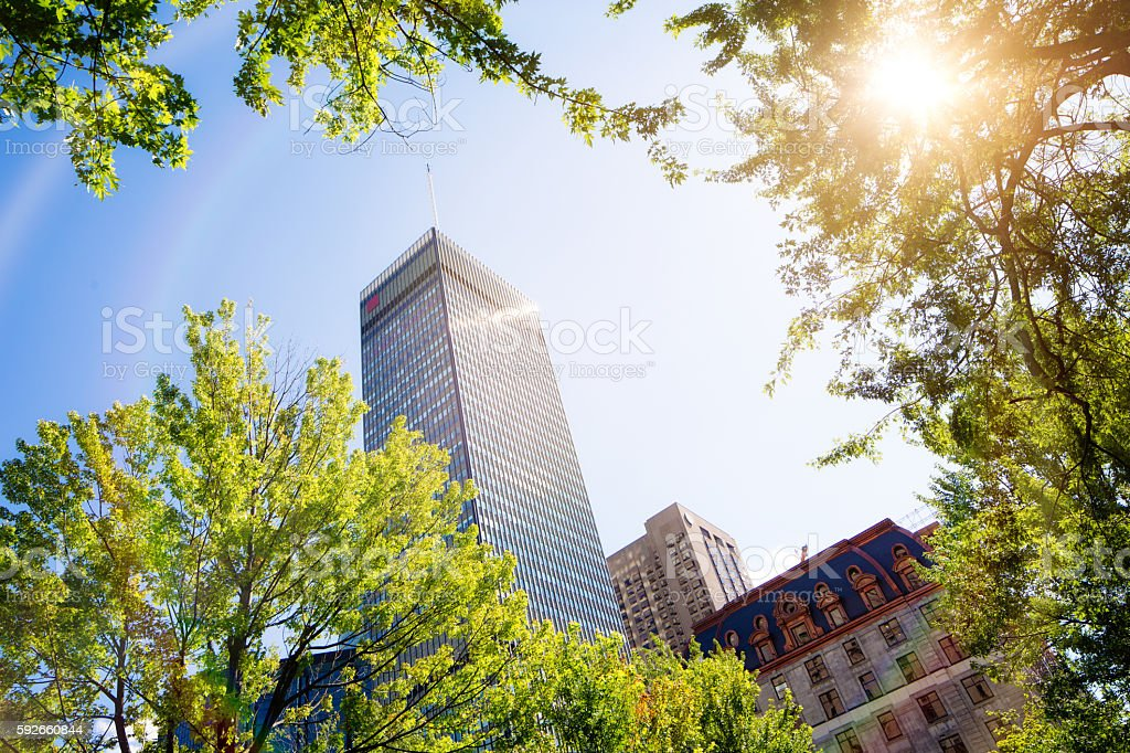 Montreal high rise with sun flare and tree tops stock photo