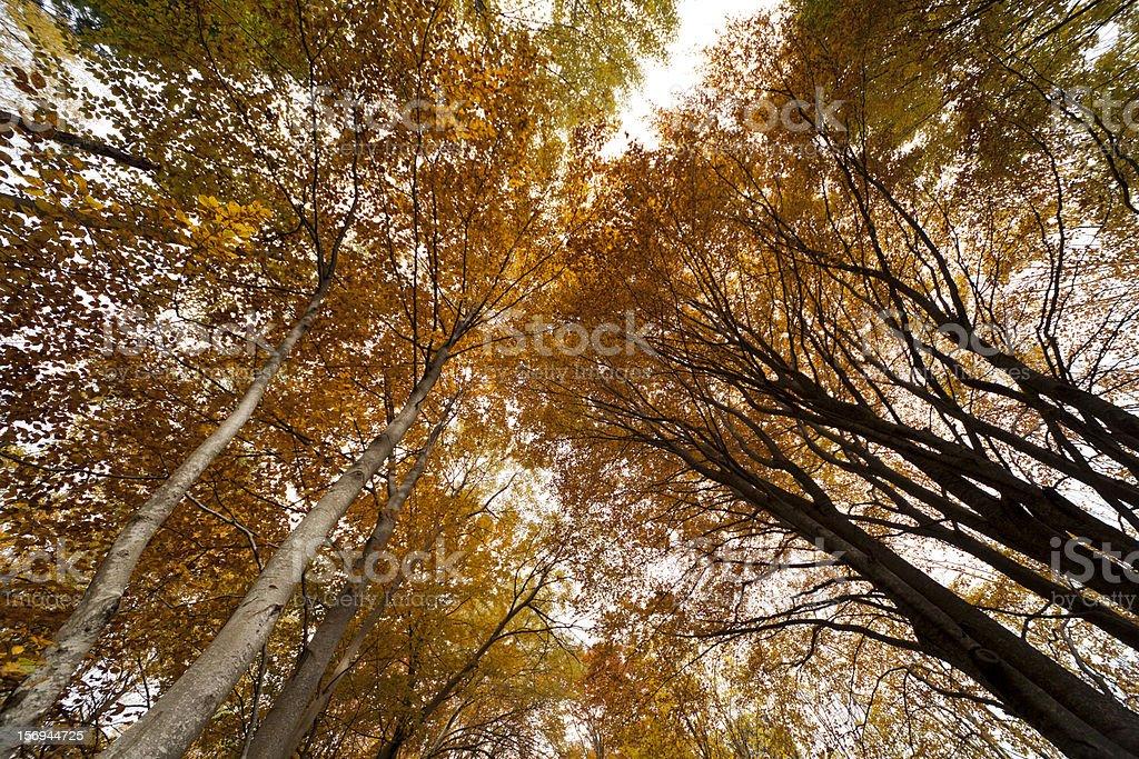 Montseny in autumn stock photo