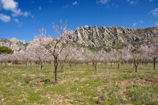 Montserrat in the Spring