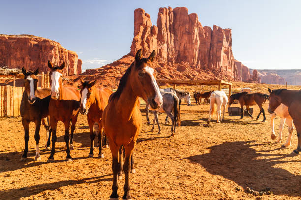 Monument Valley. Horses and Rocks stock photo