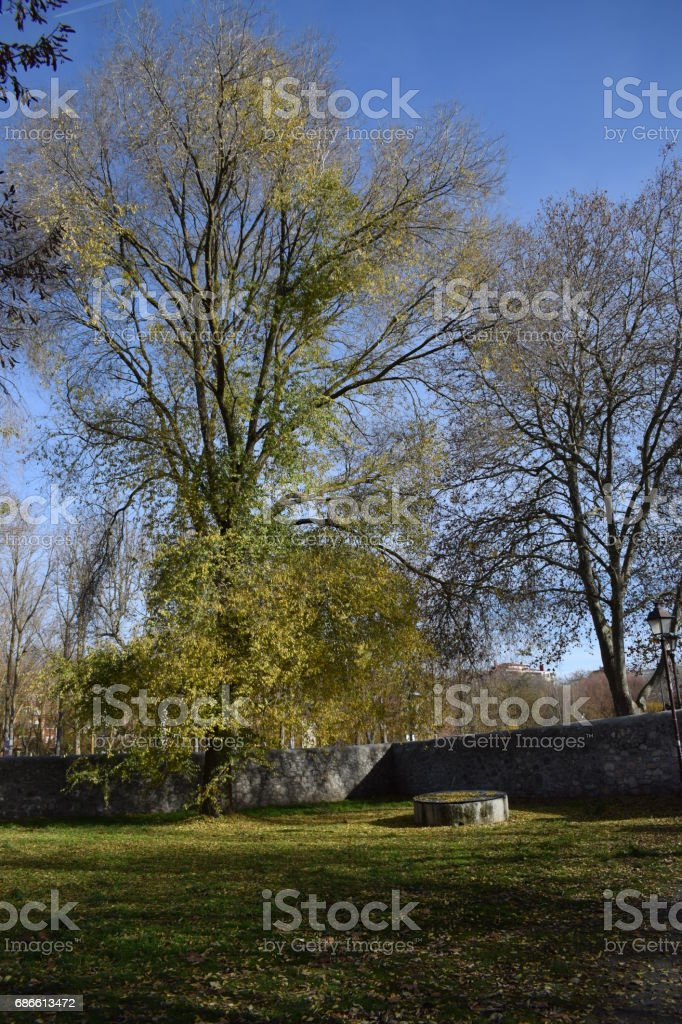 Monumental forests. royalty-free stock photo