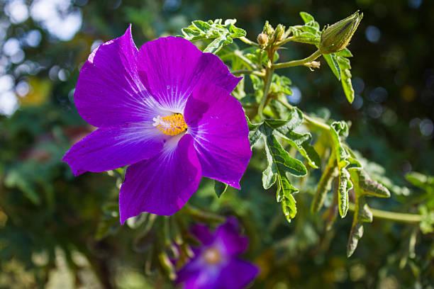 Mood Indigo Flower stock photo