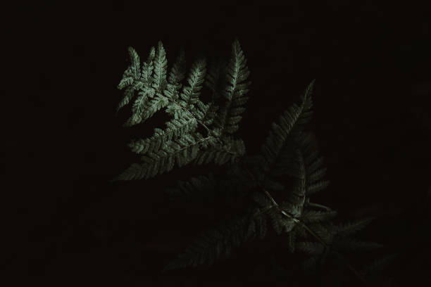 Moody Dark Photograph of Fern in the Forest stock photo