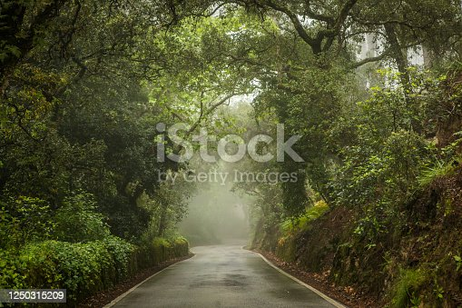 istock Moody day in forest. 1250315209
