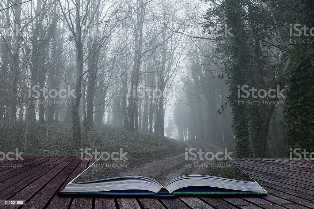 Moody dramatic foggy forest landscape Spring Autumn Fall stock photo