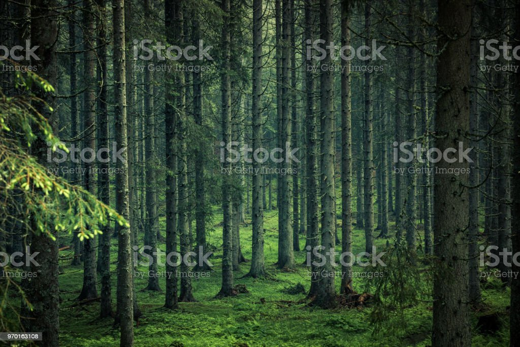 Moody image of magical forest in Slovenia royalty-free stock photo