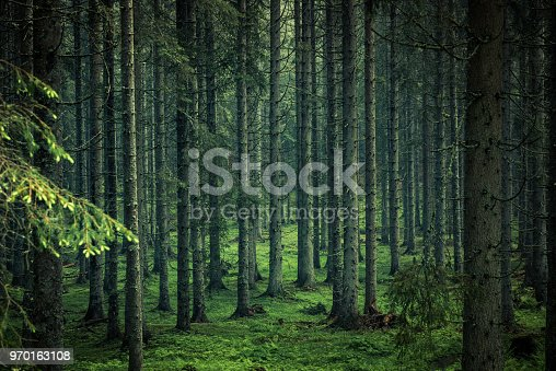 Moody image of magical forest in Slovenia.