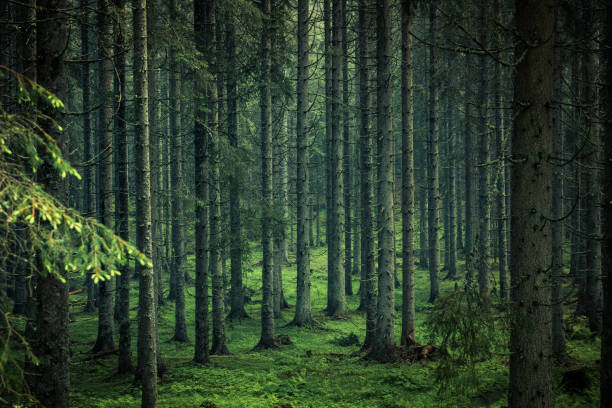 moody image of magical forest in slovenia - forest imagens e fotografias de stock