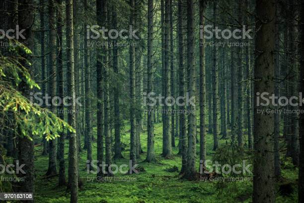Photo of Moody image of magical forest in Slovenia