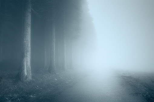 moody landscape with a foggy road