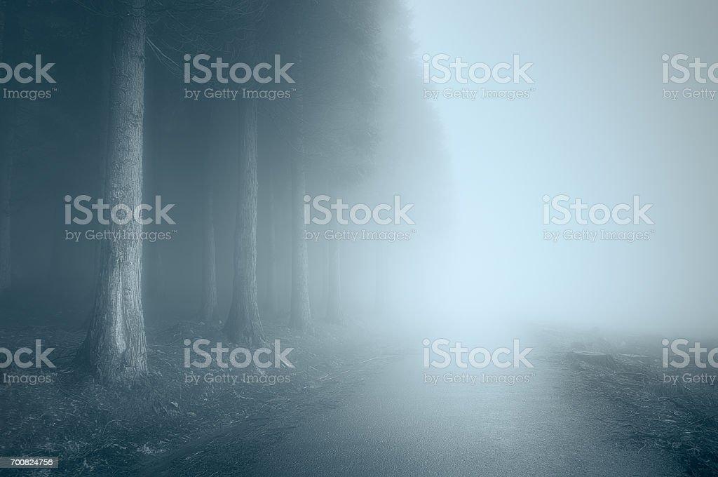 mauvaise humeur paysage avec un chemin brumeux - Photo