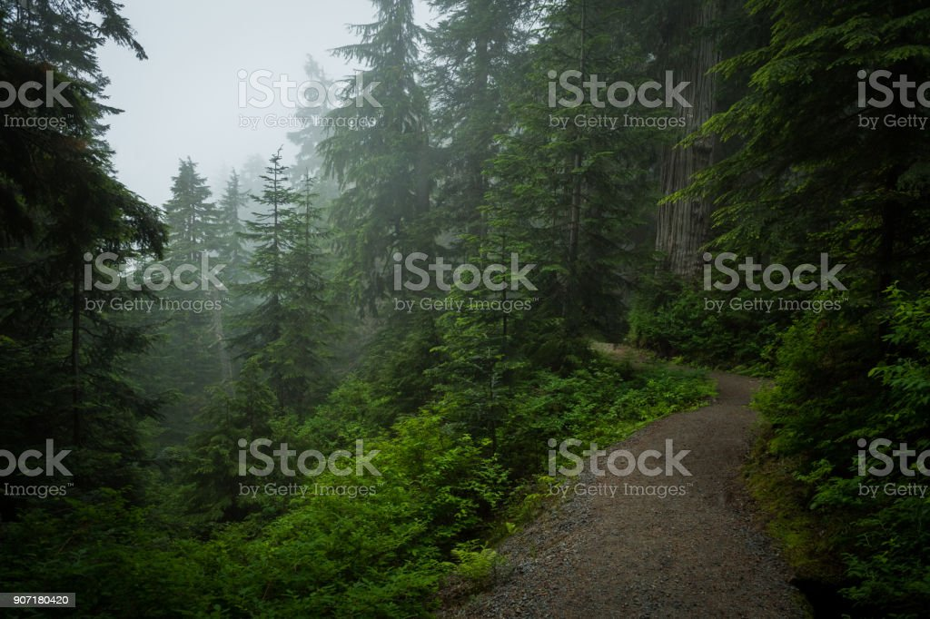 Moody lush green forest stock photo