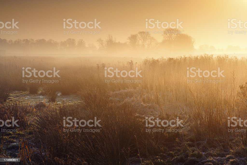 Moody morning landscape royalty-free stock photo