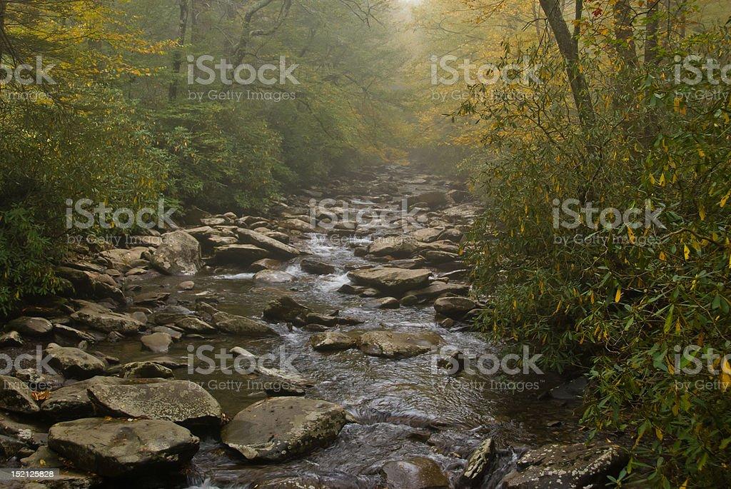 Moody scene of mist over Alum Cave Creek stock photo