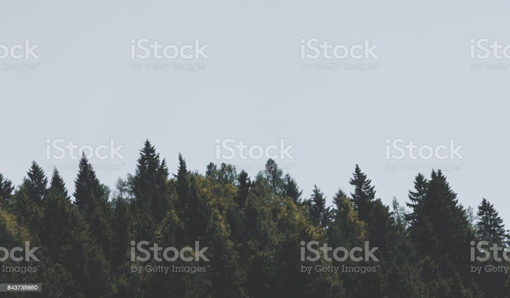 Moody sky and pine tree line background stock photo