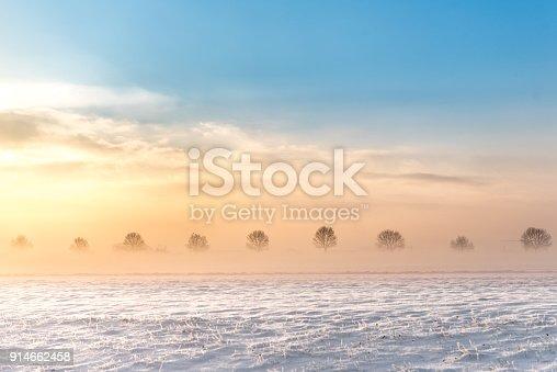 Moody sunrise in fog in winter - trees in a row in a white snowy landscape