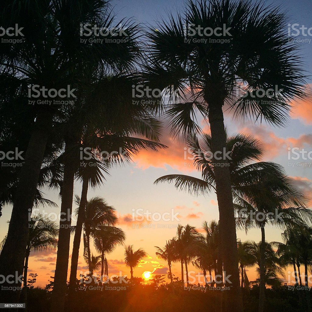 Moody Sunset with Palm Tree Silhouettes - Mobile Stock stock photo