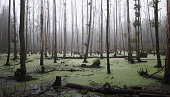 Panoramic view of a swamp in the forest