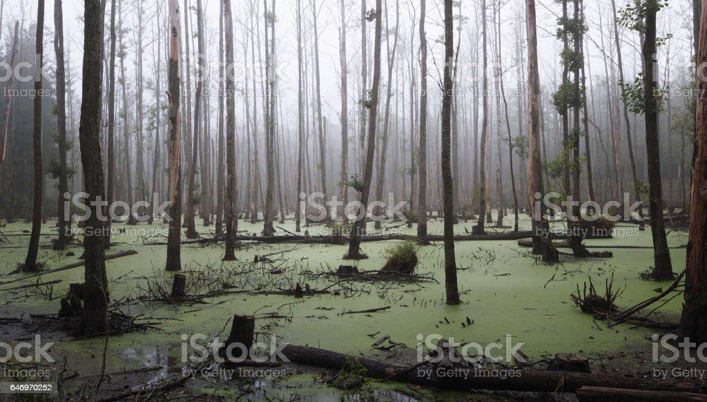 Moody swamp stock photo