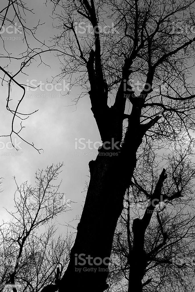 Moody silhuetas de árvore foto royalty-free