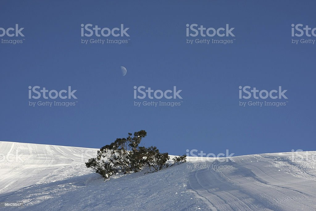 Moon above lone tree amoung groomed slopes royalty-free stock photo
