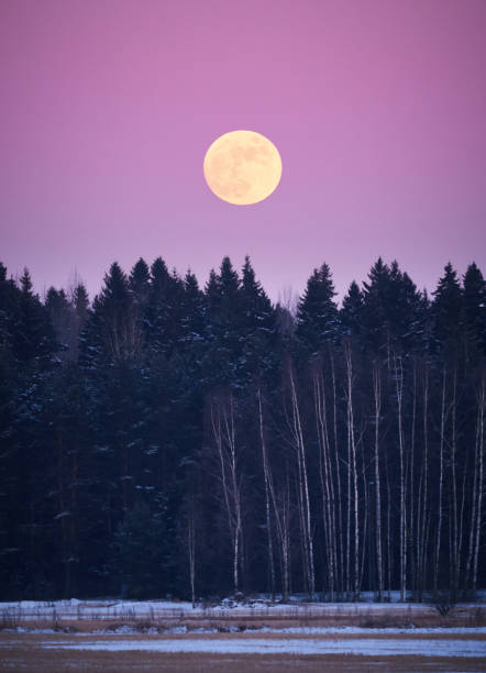 Moon above the forest at night stock photo