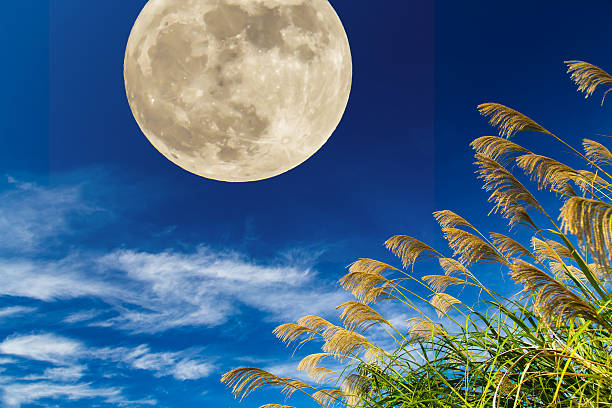 moon and japanese pampas grass - miscanthus sinensis foto e immagini stock