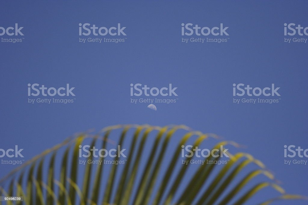 Moon and Palm royalty-free stock photo