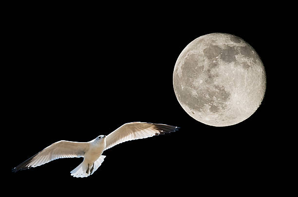 Moon and Seagull stock photo