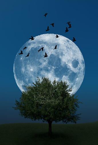 Moon behind birds flying over single tree on grass hill