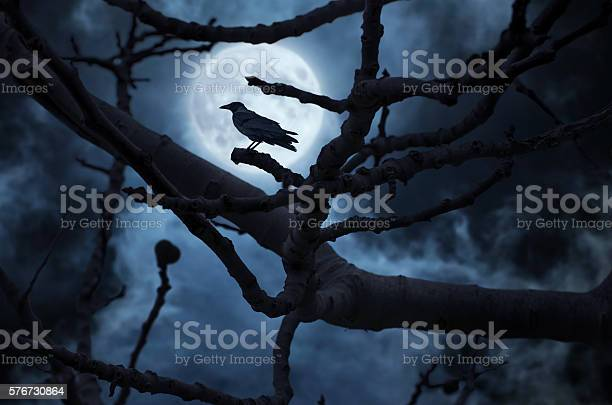 Photo of Moon behind the tree and a raven on it.
