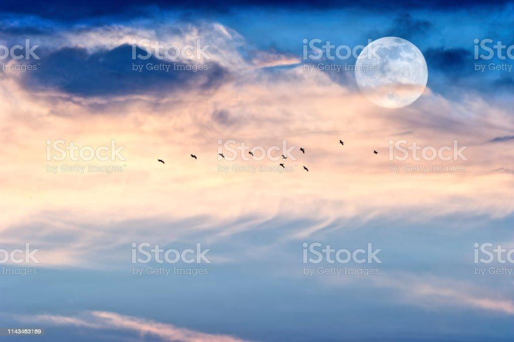 Mondwolkenvögel – Foto