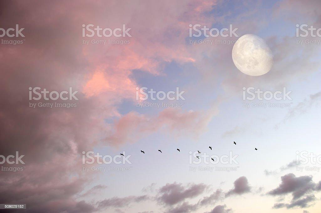Moon Wolken Himmel Vögel Silhouette – Foto