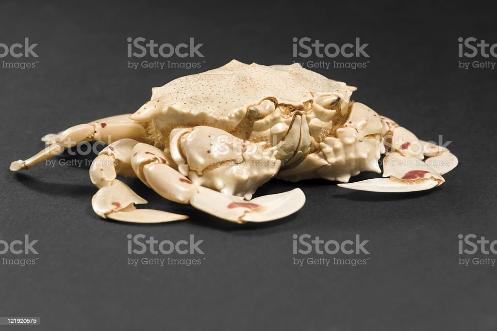 moon crab in dark ambiance stock photo