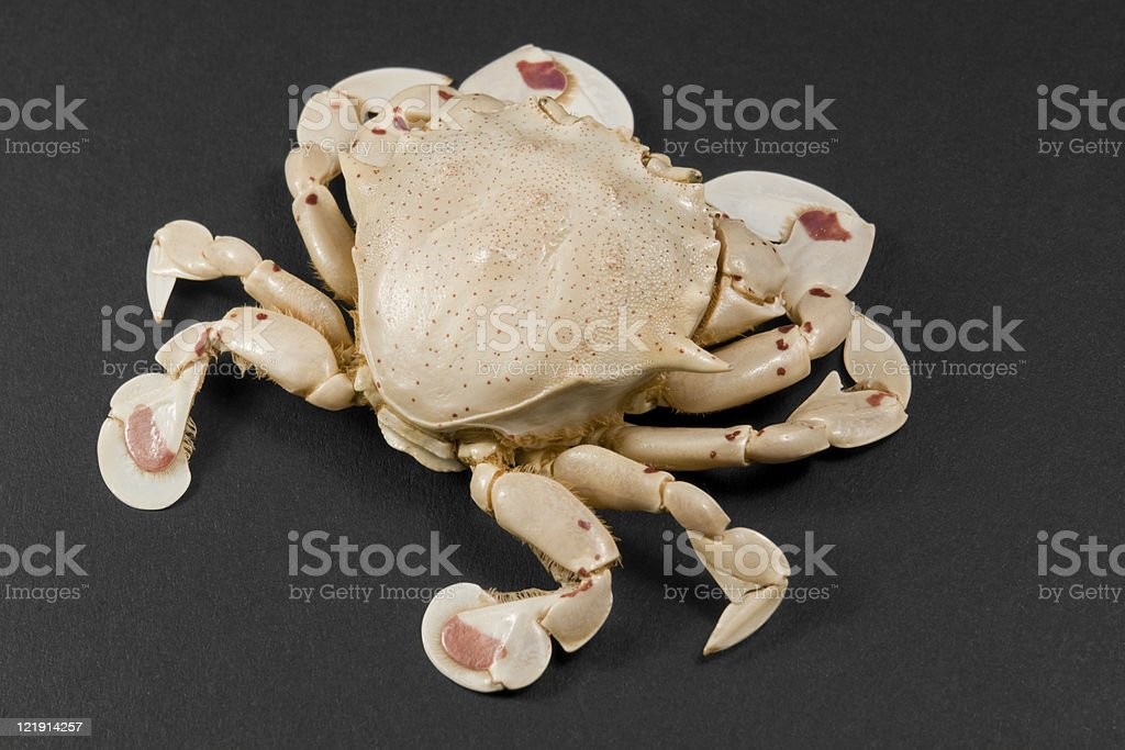 moon crab stock photo