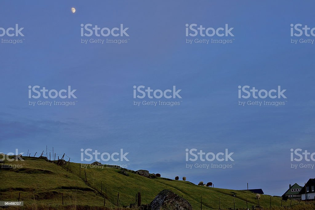 Moon, dark sky and sheep royalty-free stock photo