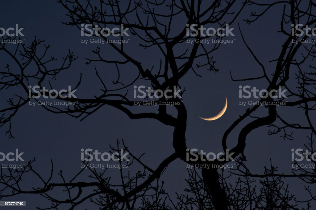 Moon in between branches of bare tree stock photo
