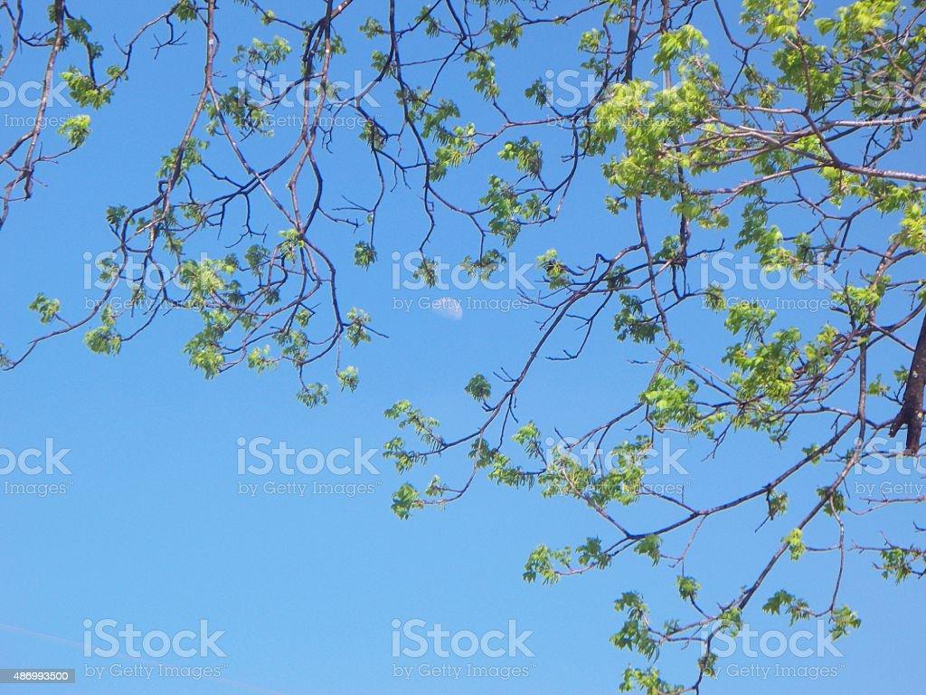 Moon in the Tree stock photo