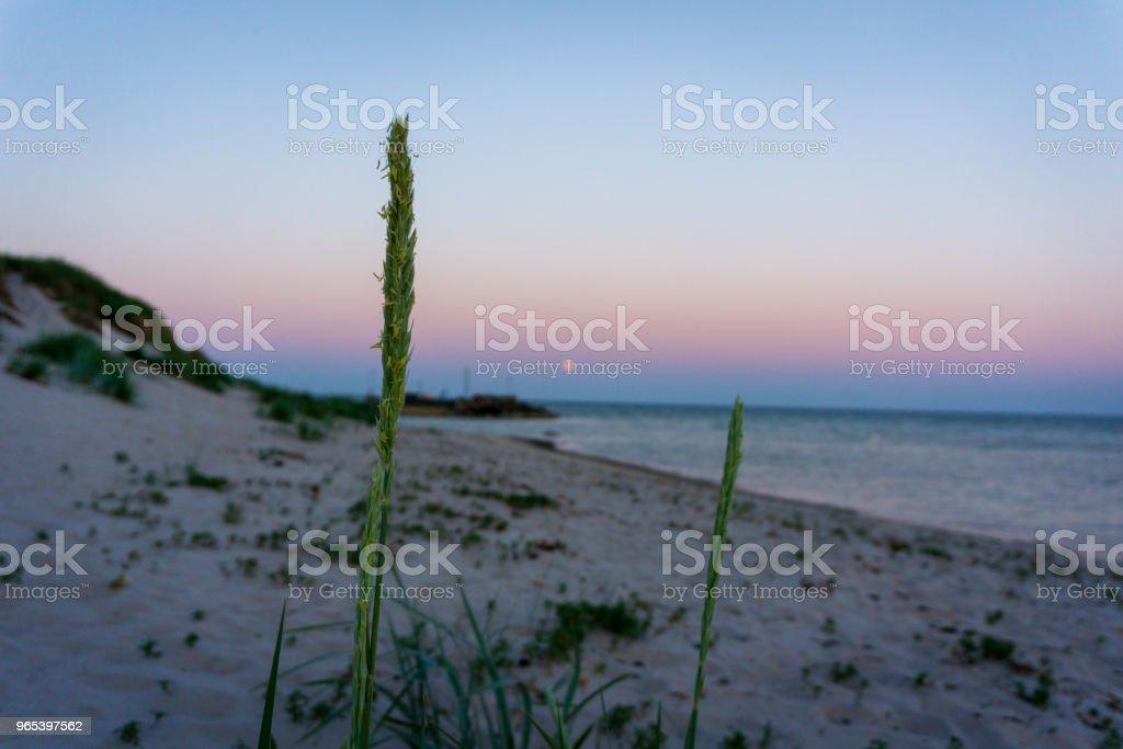 여름에는 하루에 목가적인 보 른 홀 름, 덴마크에 달 상승 - 로열티 프리 0명 스톡 사진
