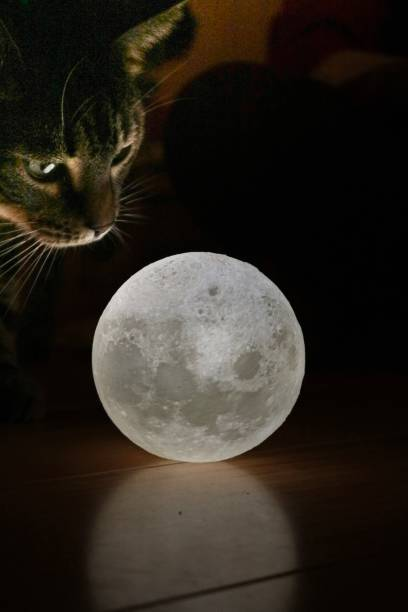 Moon lamp and cat stock photo